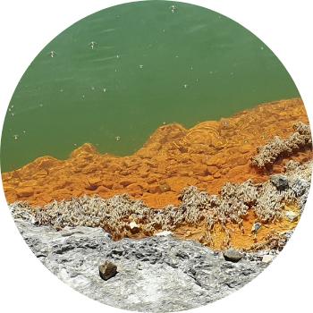 oranje alg op rots partner4u